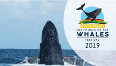 Sodurba Welcoming of the Whales Street Festival 2019